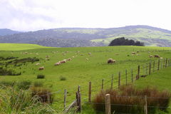 Green pastures Stock Photos