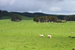 Green pastures Stock Images