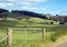 Green pastures. Barbed wire fence and gate in front of green pastures and rolling hills Royalty Free Stock Image