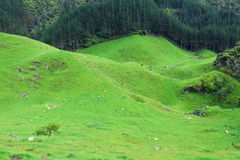 Green pastures Stock Photos
