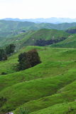 Green pastures Stock Image
