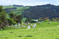 Green pastures and bee hives stock photos