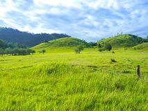 Green pastures and  blue skies. A landscape with green grassland and rolling hills Stock Photo