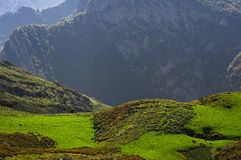 Green pastures with cattle in the mountains Royalty Free Stock Photos