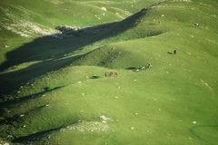 Green pastures in Durmitor national park, Montenegro stock photo