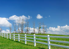 Green pastures farm. Country summer landscape. Stock Photography