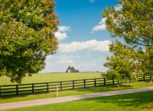 Green pastures of horse farms Stock Photos