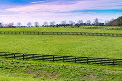 Green pastures of horse farms. Country spring landscape. Stock Photo