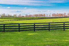 Green pastures of horse farms. Country spring landscape. Royalty Free Stock Photography