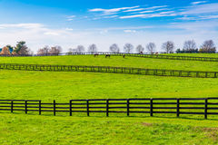 Green pastures of horse farms. Country spring landscape. Stock Photos