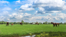 Green pastures of horse farms. Country spring landscape. Stock Photography
