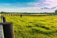 Green pastures of horse farms. Country summer landscape. Stock Images