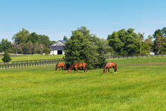 Green pastures of horse farms. Country summer landscape. Royalty Free Stock Image