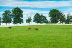 Green pastures of horse farms. Country summer landscape. Royalty Free Stock Photos