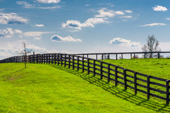 Green pastures of horse farms. Countryside spring landscape. Green pastures of horse farms. Countryside spring landscape Royalty Free Stock Photo
