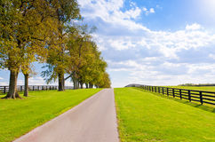Green pastures of horse farms Stock Images