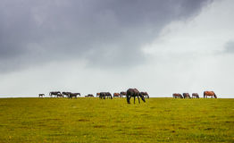 Green pastures of horse farms. Royalty Free Stock Photography