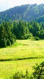 Green pastures. Lovely day in nature Royalty Free Stock Photo