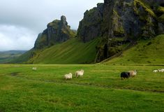 Green Hills. Green pastures & mountains, countryside Iceland Royalty Free Stock Image