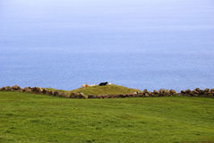 Green pastures of Pico, Azores Stock Photo