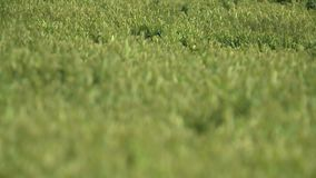 Green pastures shot on a summer day stock video footage