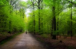 Green Path Stock Images