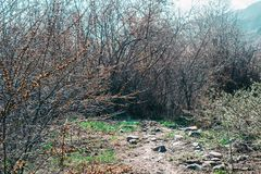 Green path on the background of trees royalty free stock photo