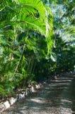 Green path Stock Photos