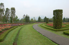 Green path on flower garden. A green path sorrounded by flowers on Taman Bunga, Puncak, West Java, Indonesia stock photos