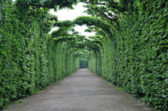 Green path in the forest. Deep green path in the gardens of Schönbrunn Palace Royalty Free Stock Image