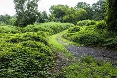 Green path in a forest. During a summer day royalty free stock photography