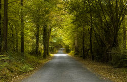 Green path. A path in Galicia, in the north west of Spain Royalty Free Stock Photo