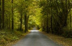 Green path Royalty Free Stock Photo