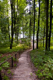 Green path going the lake side. In the forest  poland Stock Image