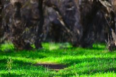 Green Path. At Laguna, La Carlota royalty free stock images