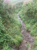 Green Path, The Lizard, Cornwall UK Royalty Free Stock Photo