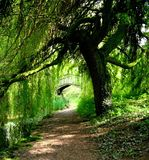 Green path Royalty Free Stock Photography