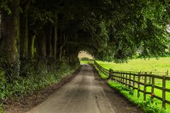 Green, Path, Road, Nature royalty free stock photo