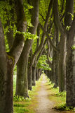 Green path royalty free stock photo