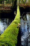 Green path to future. We must find soft natur way to reach sustainable and ecological solutions. A tree that has fallen over the r stock images