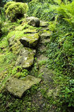 Green path Stock Photography