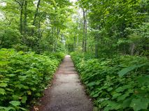 The green path at the Wisconsin State Park. The green paved path at the Wisconsin State Park trail trails discoverWisconsin Discover vegetation outside walking Royalty Free Stock Photos