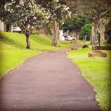 Green pathway Stock Photography