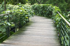 Green pathway Royalty Free Stock Photo