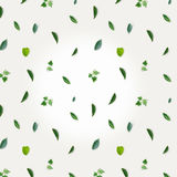 Green pattern made of greenery, parsley and basil on white table cloth Royalty Free Stock Photography