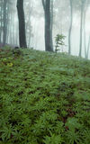 Green pattern of plants in a forest with fog Royalty Free Stock Photography