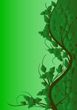 Green pattern of roses Royalty Free Stock Photos
