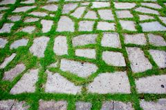 Green Pattern Walkway-2 Royalty Free Stock Images