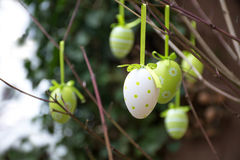 Green patterned easter eggs hanging in bare branches Stock Images