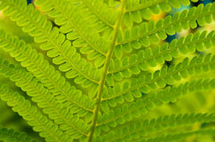 Green patterned leaf Stock Image